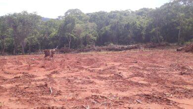Foto de Polícia Militar Ambiental de Corumbá autua infrator por desmatamento ilegal em propriedade à margem da Estrada Parque no Pantanal |