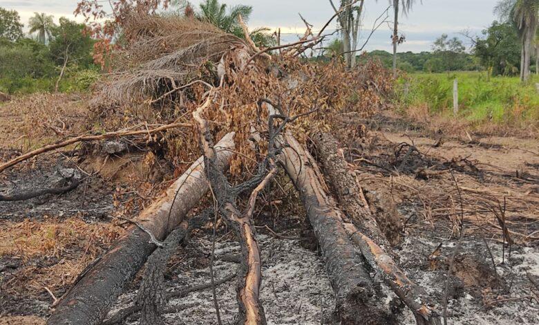Polícia Militar Ambiental de Bela Vista autua assentado em R$ 2,4 mil por desmatamento ilegal de 4 hectares e incêndio de vegetação nativa |