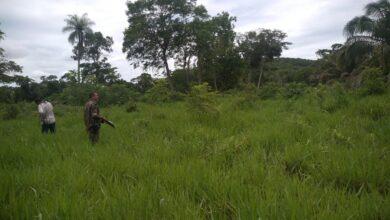 Foto de Polícia Militar Ambiental de Corumbá autua empresa paulista dona de fazenda em R$ 6 mil por desmatamento e exploração de madeira ilegalmente no Pantanal |
