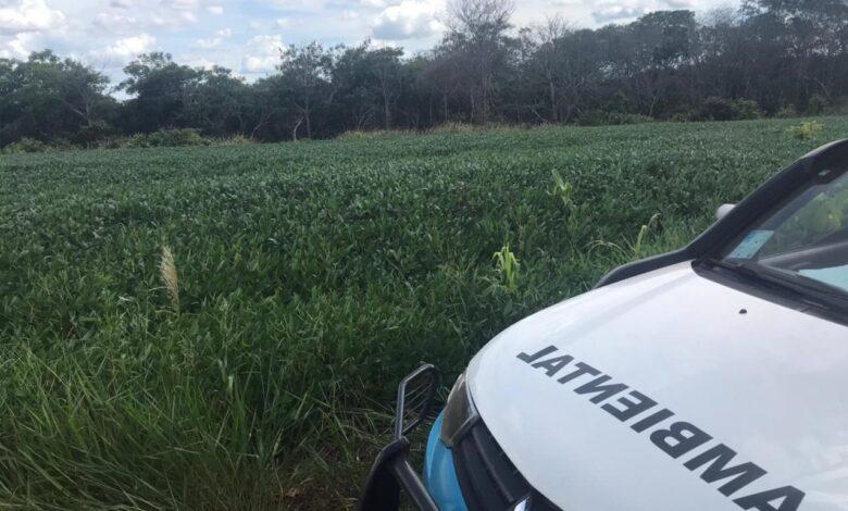 Polícia Militar Ambiental de São Gabriel do Oeste autua infrator por desmatamento ilegal descoberto por imagem de satélites |