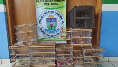 Foto de Polícia Militar Ambiental de Três Lagoas autua homem de 49 anos em R$ 4,5 mil por manter pássaros silvestres ilegalmente em cativeiro |