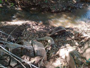 PMA de Aquidauana autua infrator em R$ 5 mil por usar pneus para conter erosão de margem de córrego e agravar mais a degradação da área |