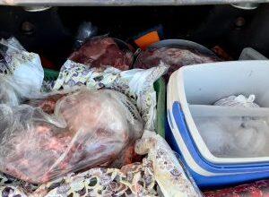 Foto de Pai e filho suspeitos de furto e abate ilegal de gado são presos em Rio Verde