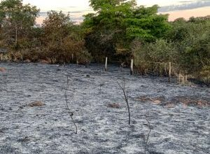Foto de Polícia Militar Ambiental de Batayporã autua empresa agropecuária em R$ 58 mil por incêndio que atingiu pastagem e vegetação protegida de reserva legal |