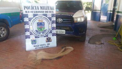 Foto de Polícia Militar Ambiental de Bela Vista prende e autua em R$ 1,4 mil infrator por pesca predatória com uso de tarrafa no rio Apa |