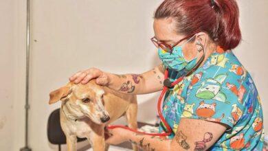 Foto de Prefeitura abre nesta terça-feira as propostas de clínicas interessadas na castração de cães e gatos | CGNotícias
