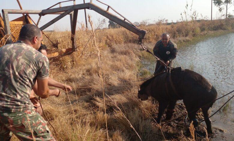 Polícia Militar Ambiental de Campo Grande resgata anta de 200 kg com a pata quase decepada por cabo de aço de armadilha de caça e usa até pá-carregadeira nos trabalhos |