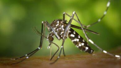Foto de Boletim desta semana contabiliza mais 01 caso de leishmaniose e notifica 07 casos suspeitos de dengue em Três Lagoas