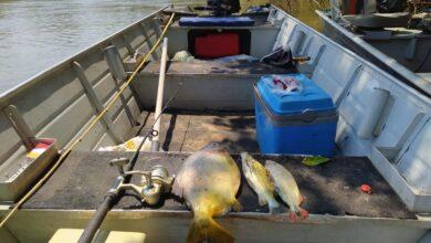 Foto de PMA de Aquidauana prende e autua turista paulista por pesca predatória no rio Aquidauana e apreende pescado, barco, motor e petrechos de pesca –